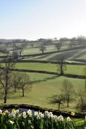 tynllwyn farm