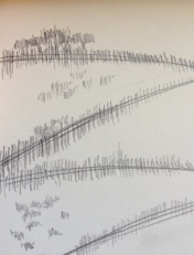 hedgerows sketch