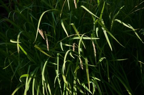 Roz Moreton - Grass project