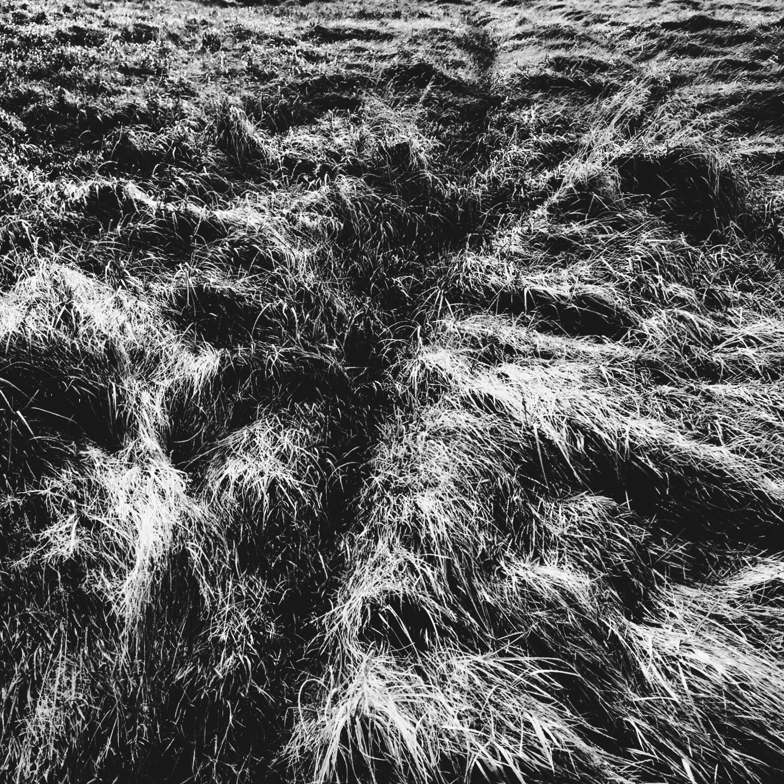 Roz Moreton - Grasses Project - Paths - Dog Walking Path - Burry Port 2019