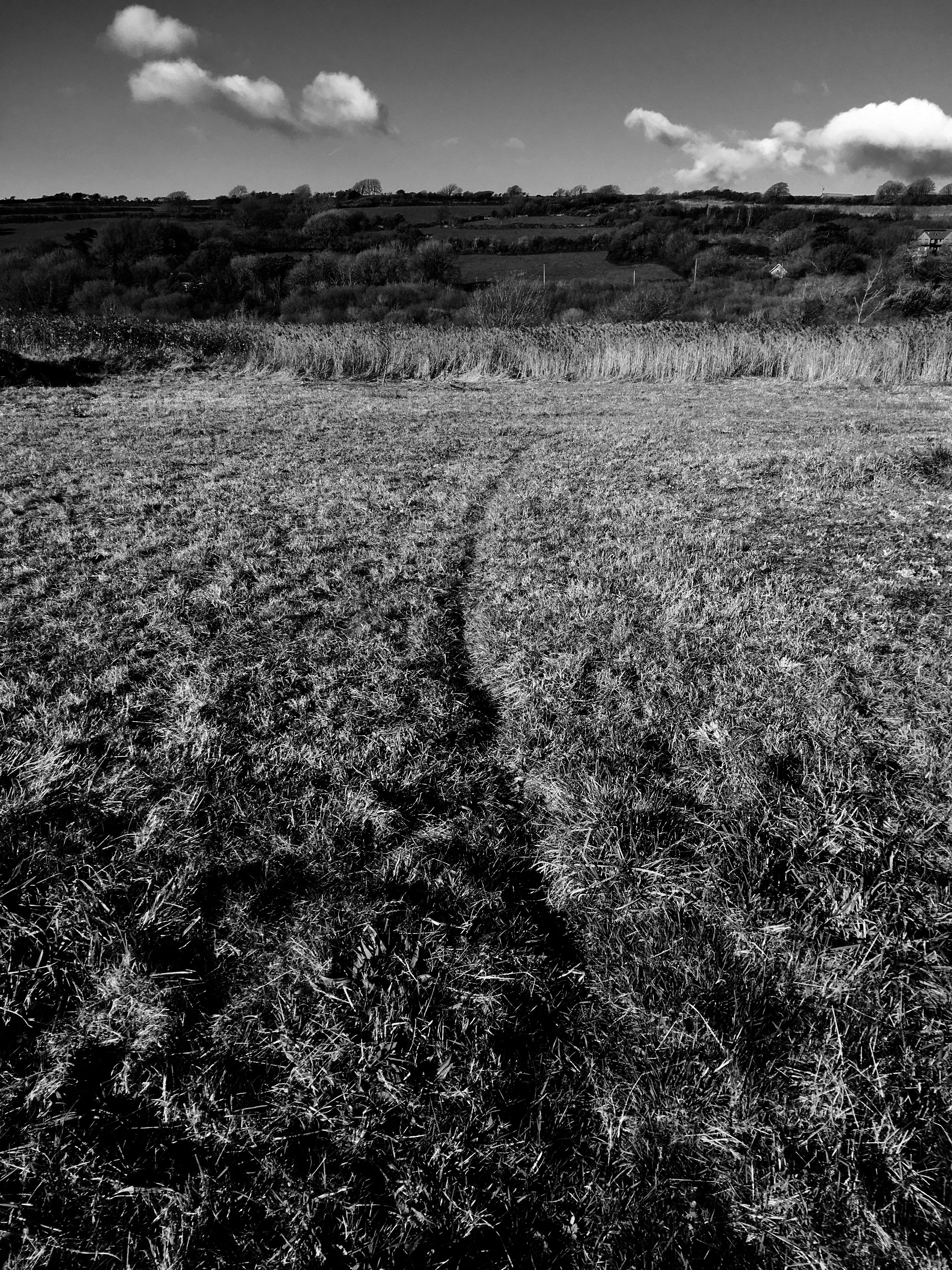 Roz Moreton - Grasses Project - Paths - Kidwelly 2019