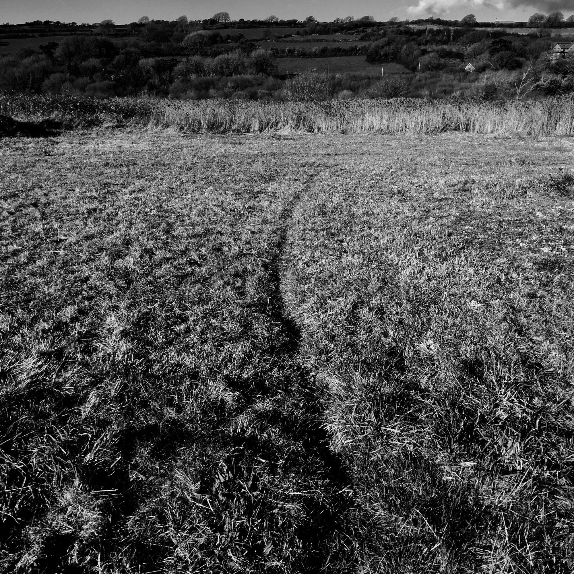 Roz Moreton Grasses Project - Paths - animal track - Kidwelly 2019