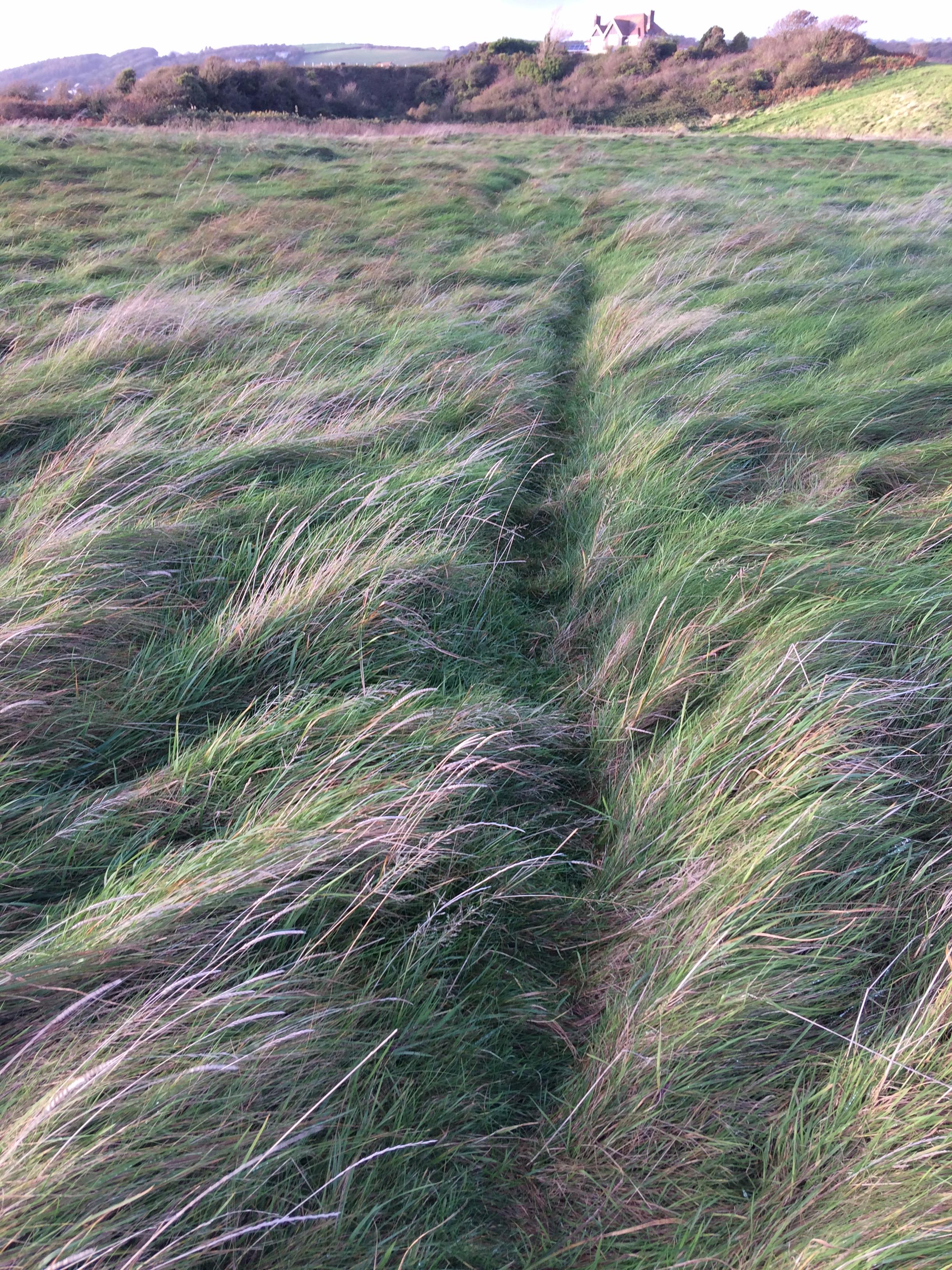 Roz Moreton - Grasses Project - Paths - Burry Port 2018