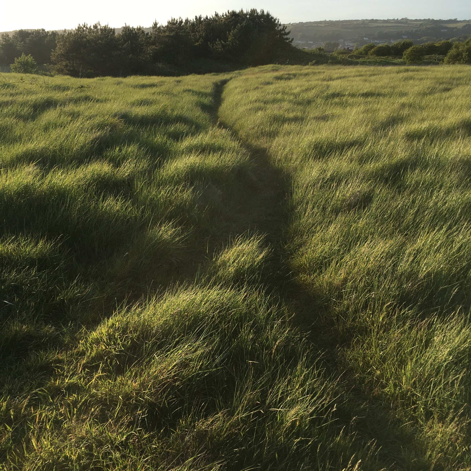 Grasses Project - Paths - Walking Path No13- Burry Port 2020